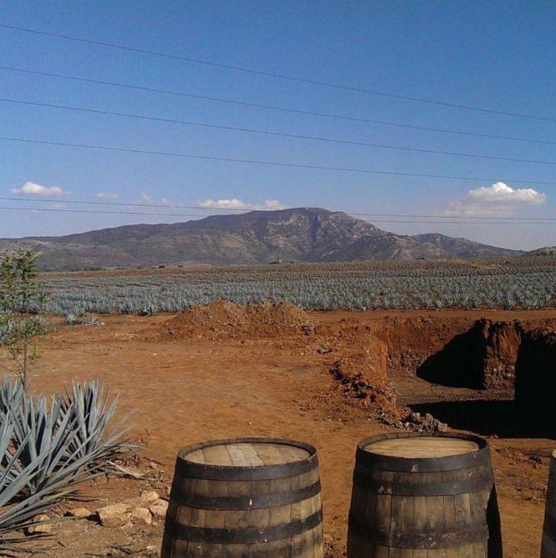 Un viaggio alla scoperta del distillato più famoso al mondo: la Tequila