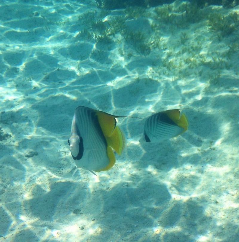 Un viaggio verso la scoperta di una delle barriere coralline più belle al mondo