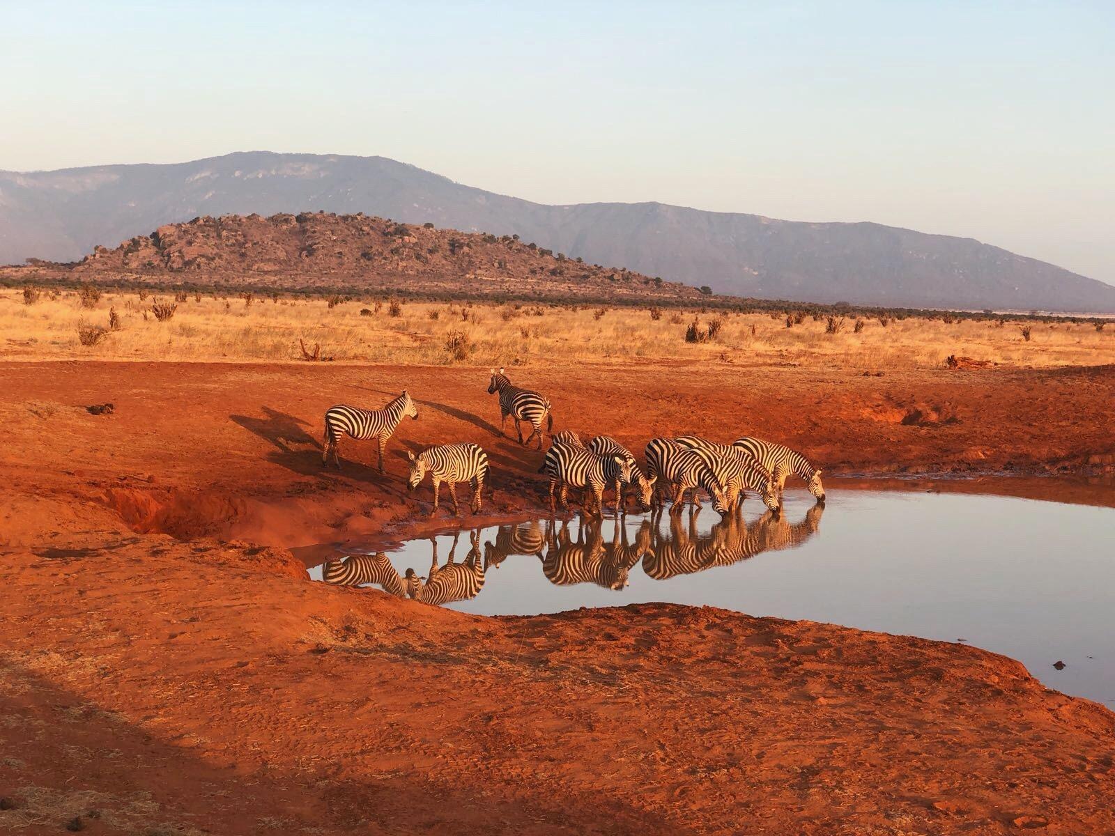 Kenya a febbraio, uno spettacolo che non dimenticherete