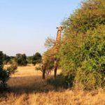 Come vivere il Kenya, partire sicuri ed equipaggiati