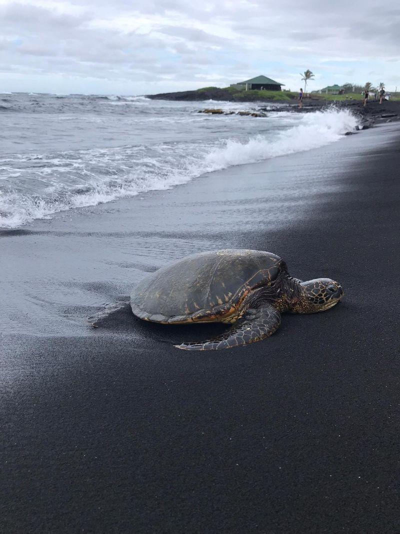 Vagare per le Hawaii